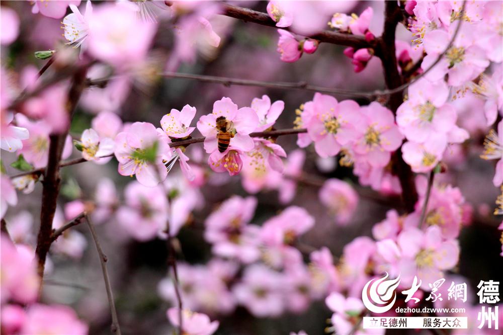 1.随着气温回升,德州也呈现出一片盎然春意。在春天即将到来的时光里,色彩斑斓的花朵,争先恐后地开放了。(大众网记者 祁小丽 见习记者 刘龙飞 实习生 韩颖 摄影报道)