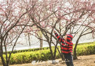 暖暖的春风迎面吹,花儿朵朵开。近日,欧博娱乐天气逐渐转暖,城内繁花盛开,吸引了不少市民前来观赏。(大众网记者 赵凤瑞 摄影报道)