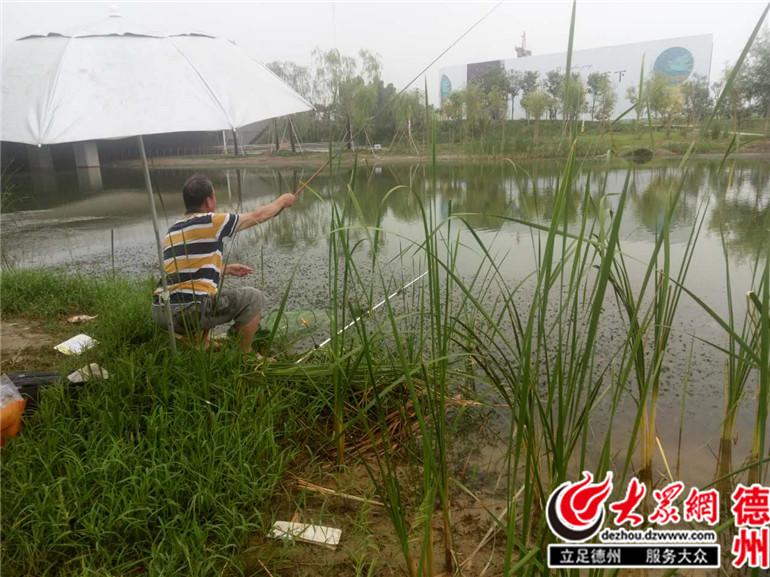 齐河景观河成捕鱼场 小伙一天垂钓达200余条